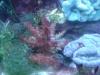 Tierfotogalerie Stieglecker -  Korallen - Sie leben auf den Skeletten ihrer Vorfahren und stehen unter Naturschutz.