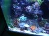 Tierfotogalerie Stieglecker -  Korallen - Trotz dieses Namens handelt es bei den Korallen also um Tiere!